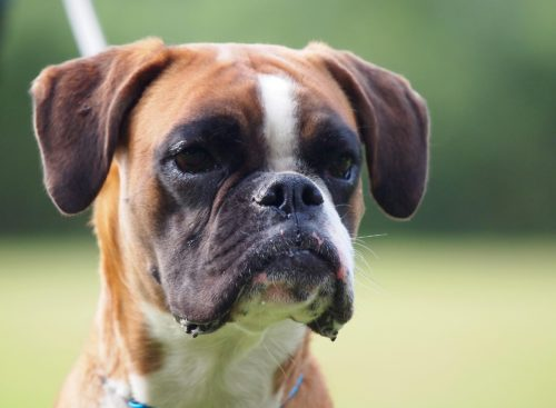 what can i give my dog for travel sickness_canna-pet