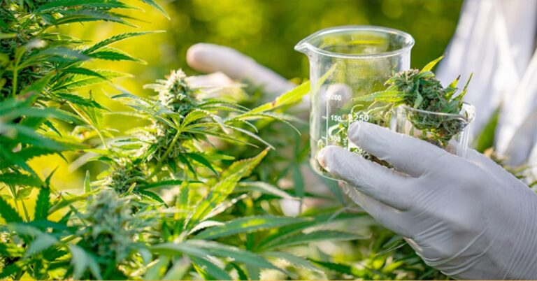 CBD Encapsulation Increases Absorption in the Brain by 300% Say Scientists