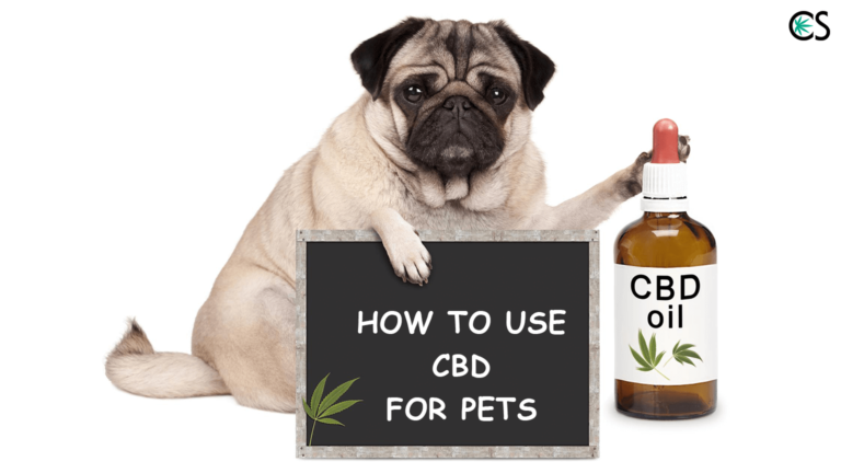 CBD for Pets: Learn More About CBD Oil for Dogs & Cats