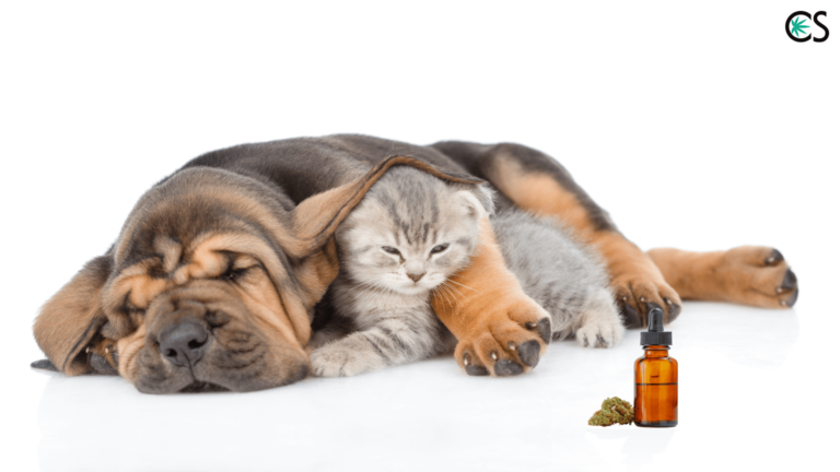 Introduction to Using CBD Hemp Oil for Pets (And Dosing Info)