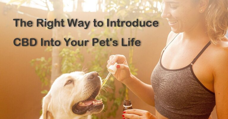 The Right Way to Introduce CBD Into Your Pet's Life