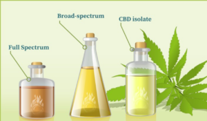 A good creative of cbd oil addressing its differences
