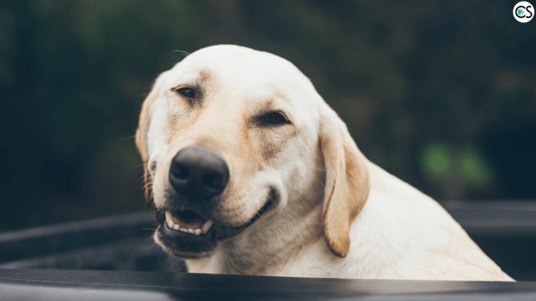 CBD for Pet Thunderstorm Anxiety
