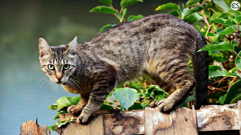 CBD for Anxious Cats: Pros and Cons