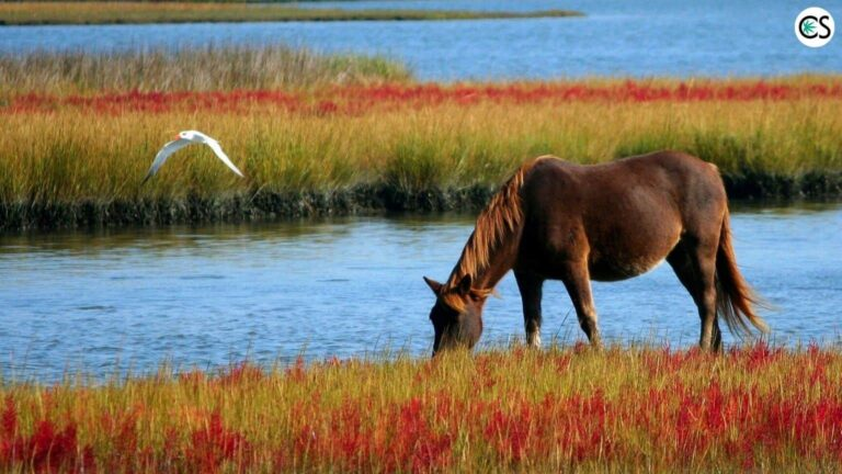 Can CBD Oil For Horses Help?