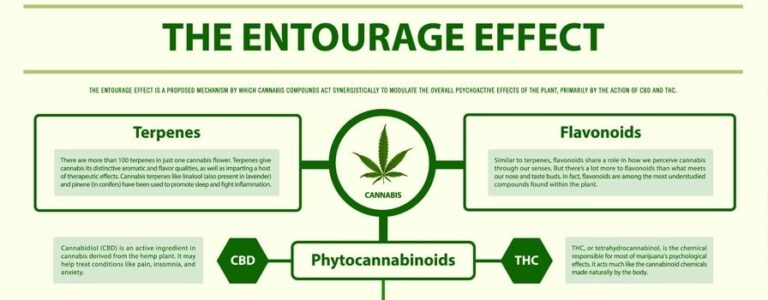 Entourage Effect – How It Works In CBD