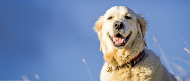 How to Help Your Overweight Pet