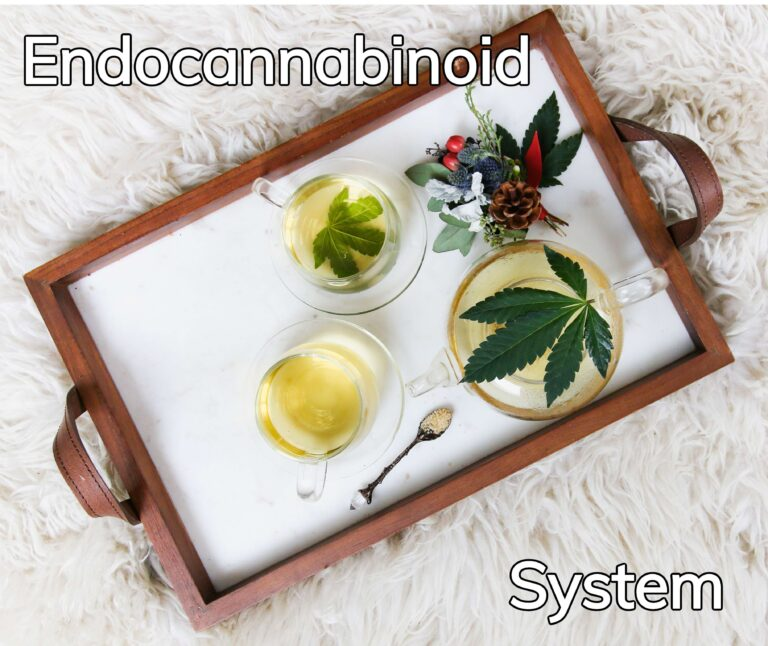 The Endocannabinoid System – A Guide to Everything you Need to Know