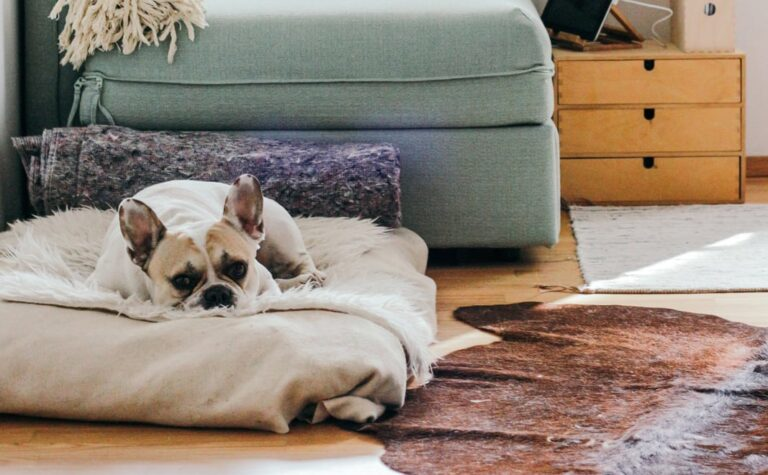 Hot spots, Irritated Skin, and Allergies in Dogs Itching and What Causes It