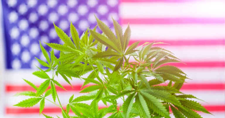 Cannabis legalization: How it Outperformed Presidential Candidates in 7 States