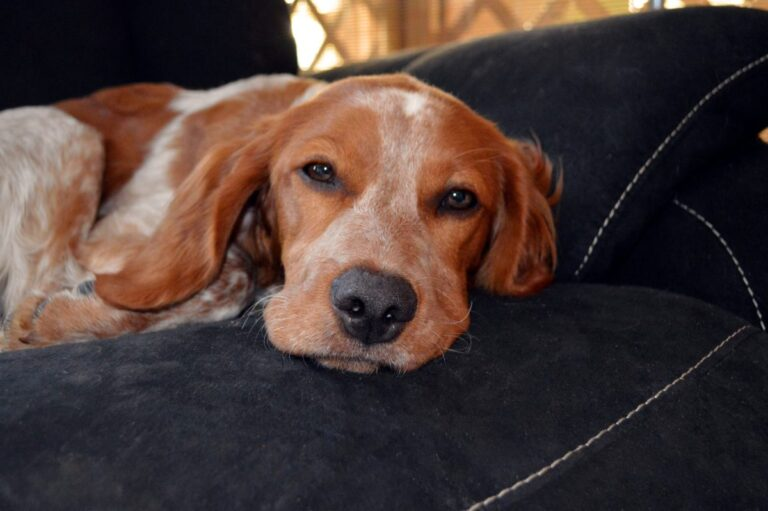 What Can I Give My Dog For Nausea?