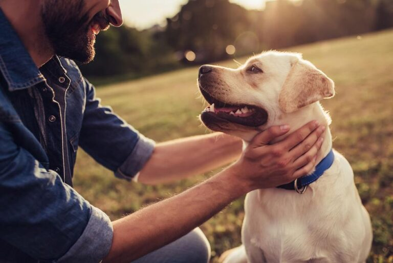 5 Reasons To Give Your Dog CBD – Medicalweeds