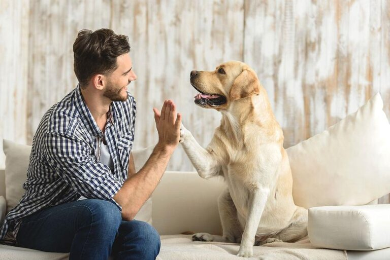 CBD Oral Products You Can Give To Your Dog – Medicalweeds