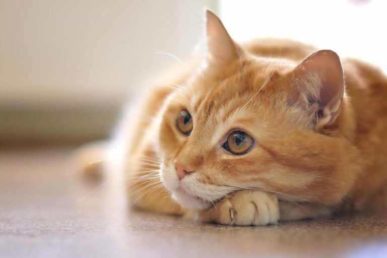 Caring For Your Cat With CBD Infused Pet Products – Medicalweeds