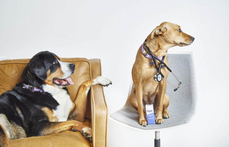 Trazodone for Dogs: Applications, Safety and Side Effects
