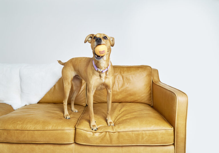 Adopting a Dog: Where to Look & What to Ask