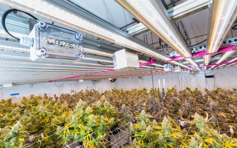 How to Use Flower-in-Place and Vertical Racking to Maximize Yield