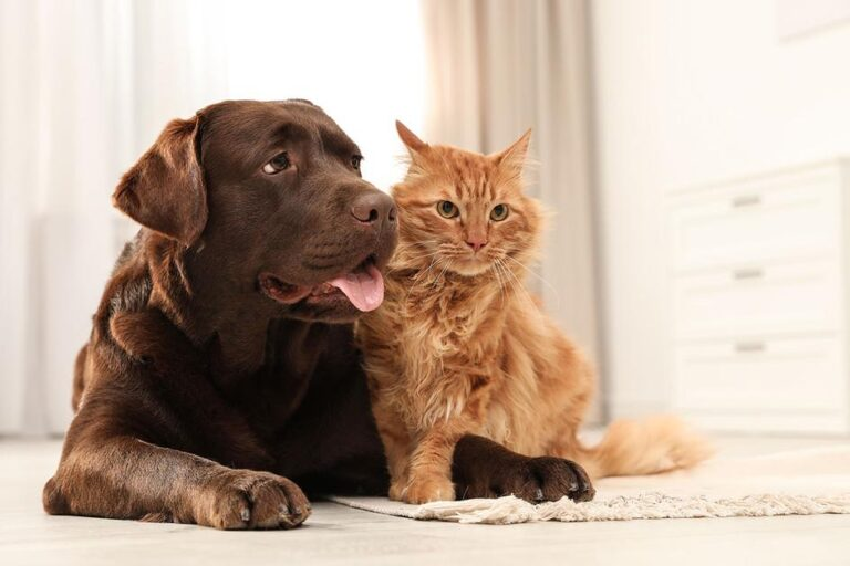 Use Medicalweeds Pet Calming Water Booster to Keep Your Pet Happy