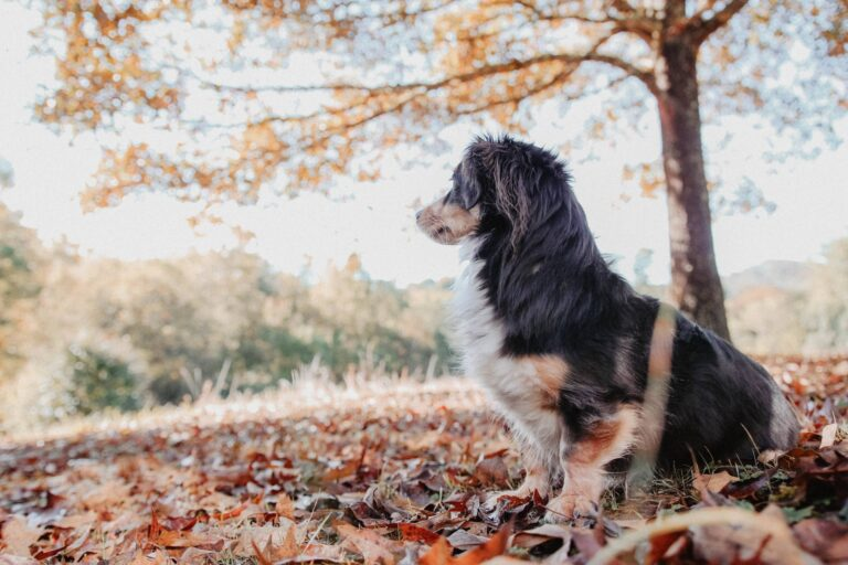 Electric Fences for Dogs: How They Work, Pros & Cons
