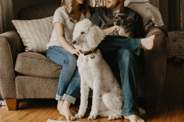 Considering getting a Family Dog? Read This!