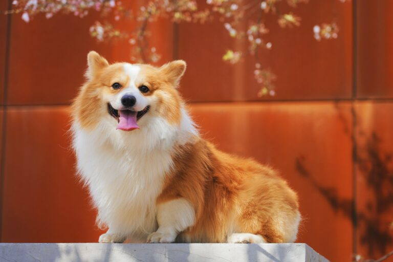 Is Cheese Safe for Dogs?: Health Benefits, Applications, and Safety