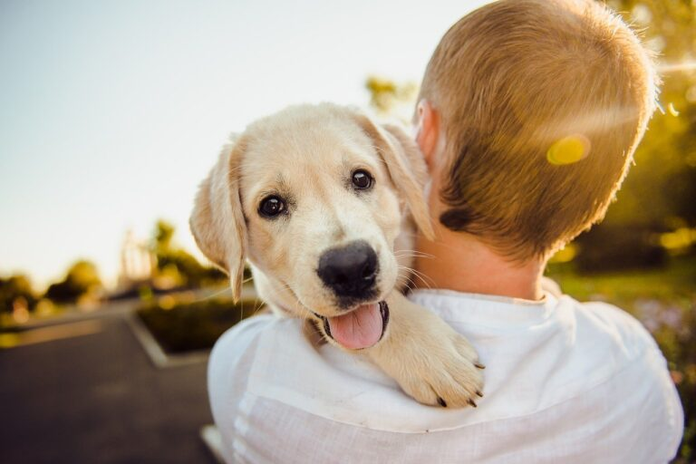 Hotels for Dogs: What They Are, Day Cares, Cost & Experience