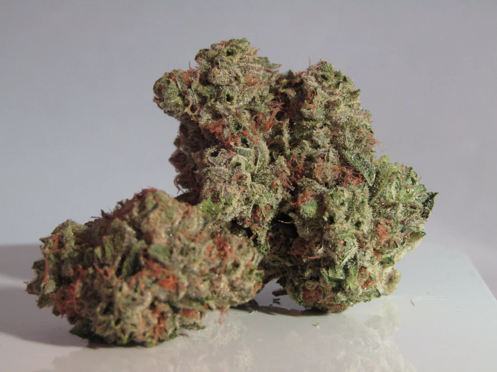 marijuana nuggets from red weed plant