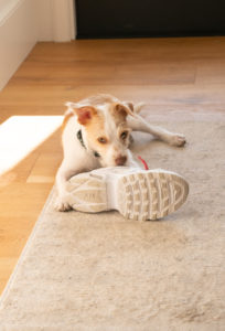 cbdfx us blog Are There CBD Drops for Dogs with sneakers