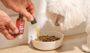 cbdfx us blog CBD for Dogs What Are the Options