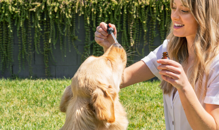 5 Reasons to Give Your Dog CBD
