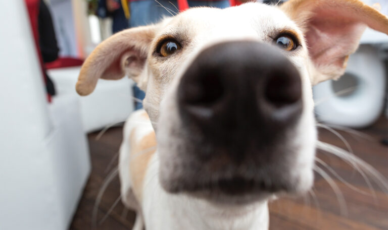 5 Things to Consider When Adopting a Pet