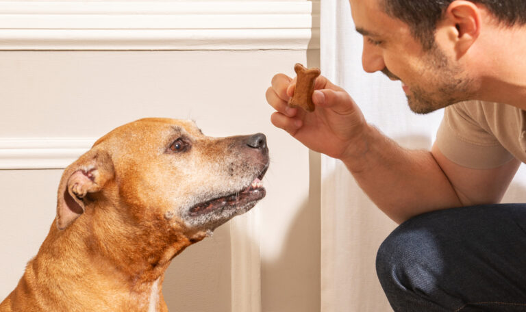 6 Ways to Give Your Dog CBD