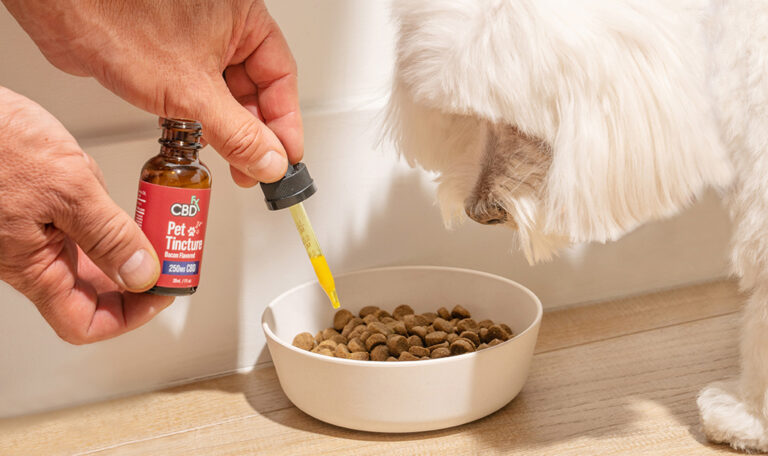CBD for Dogs: What Are the Options?