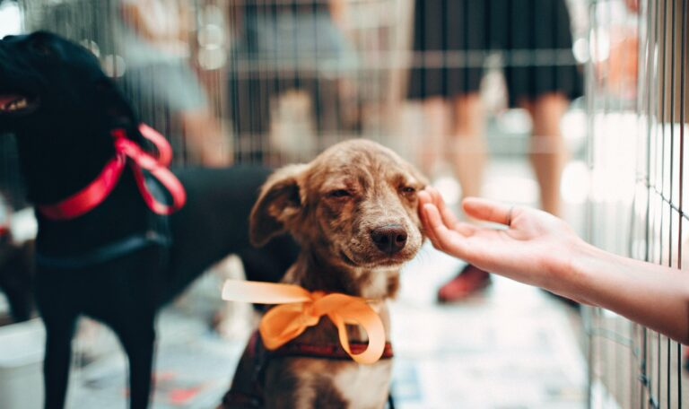 Transitioning Your Pet From Shelter to Home