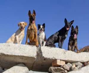 The Impact Search Dogs Have on Society