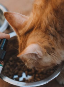 Is CBD Safe for My Cat