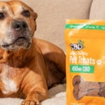 cbdfx us blog  Tips to Help Your Dog's Joints
