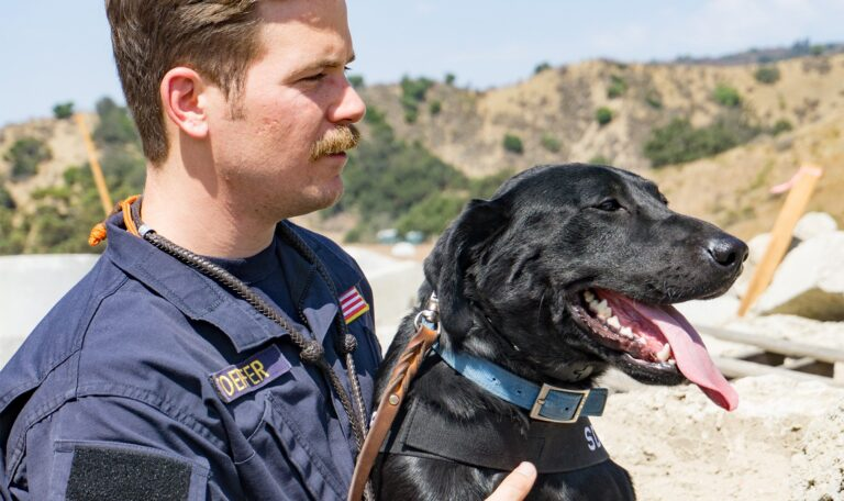 CBD With a Cause: Our Mission to Help Search Dog Foundation