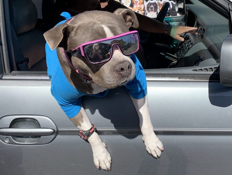 Road Trips with your Dog: How to Make it a Success